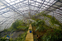 Glasshouses. A big glasshouses with plants Royalty Free Stock Image