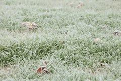 Glassi l'erba dopo una notte fredda nell'inverno Fotografie Stock Libere da Diritti