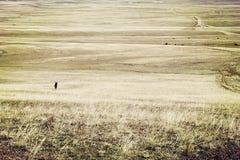 Glassland em Mongólia imagens de stock