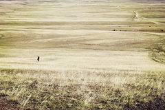 Glassland in Mongolia Stock Images