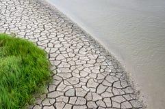Glasswort, droog modder en water Royalty-vrije Stock Afbeeldingen