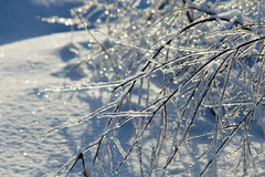 Glassy branches Stock Images
