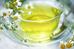 Glassy Cup of herbal tea with camomile. Glassy Cup of herbal tea with white camomile flowers royalty free stock photo