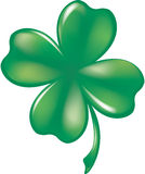 Glassy Four-Leaf Shamrock. Glassy Four-Leaf Green Shamrock Clover Stock Photos