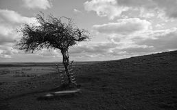 GLASTONBURY HOLY THORN. Black and white scenic view of tree in countryside with cloudscape background Royalty Free Stock Photos