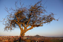 Free Glastonbury Tor And Town Stock Images - 47129414