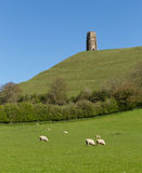 Glastonbury Tor, Somerset, England Royalty Free Stock Photo