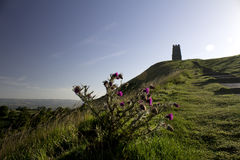 Glastonbury Tor Thistles images libres de droits