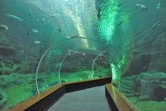 Glastunnel im Aquarium stockbilder