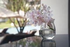Glasvaas van witte orchidee stock foto