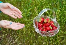 Glasvase mit einer roten reifen Erdbeere fliegt gegen einen Grashintergrund Stockbild