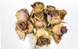 Glasvase von acht sterbenden malvenfarbenen Rosen Stockfotografie