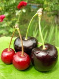 glatt Cherry Royaltyfria Foton