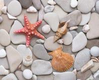 Glatte runde Kiesel, Starfish und Muscheln Lizenzfreie Stockfotos