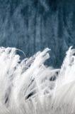 Glatte weiße Feder Stockfotografie