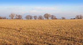 Glatte Weide am späten Nachmittag Sun Stockbild