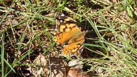 Glauben eines Schmetterlinges auf Erde Lizenzfreie Stockbilder