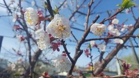 Glauben Sie dem Frühling! Lizenzfreie Stockfotografie