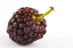 Glaucus de Rubus de Blackberry Images stock