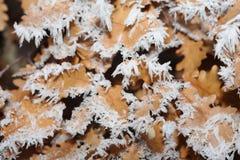 Glaze ice crystal Royalty Free Stock Images