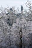 Glaze on trees Royalty Free Stock Images