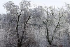 Glaze on trees Royalty Free Stock Photography