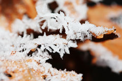 Glaze winter crystal Royalty Free Stock Images