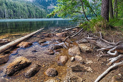 Glazial- schwarzer See umgeben durch den Wald Stockbild