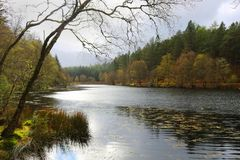 Glazig die Meer door Bomen in Glencoe Schotland wordt omringd royalty-vrije stock afbeeldingen