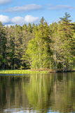 Glazig meer bij het bos stock foto's