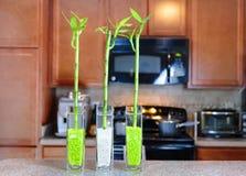 Glückliche Bambusanlagen in der Küche Stockfoto