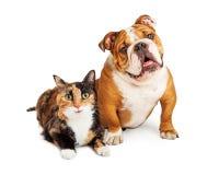 Glückliche Kaliko-Katze und Hund zusammen Stockbilder