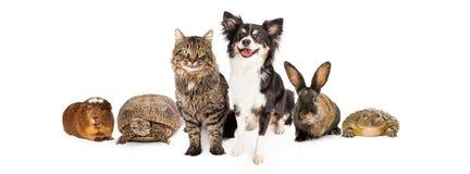 Glückliche und lächelnde Gruppe Haustiere Stockbild