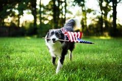Glücklicher Hund, der draußen mit amerikanischer Flagge spielt Lizenzfreie Stockbilder