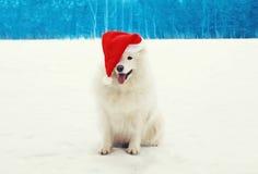 Glücklicher netter weißer Samoyedhund, der einen roten Sankt-Hut auf Schnee im Winter trägt Stockfotos