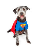 Glücklicher Superheld-Terrier-Hund Lizenzfreie Stockfotos