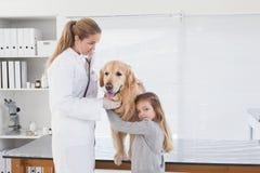 Glücklicher Tierarzt, der ein Labrador überprüft Stockfotos