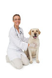 Glücklicher Tierarzt, der gelben Labrador-Hund lächelt an der Kamera streichelt Stockbilder