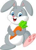 Glückliches Kaninchen, das Karotte hält Stockbilder