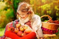 Glückliches Kindermädchen, das mit Äpfeln im sonnigen Garten des Herbstes sitzt Stockfotografie