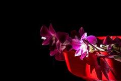 Gleam roxo da orquídea fotografia de stock