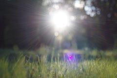 Gleam surpreendente da luz solar durante o por do sol com grama verde como o fundo da natureza fotos de stock