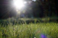 Gleam surpreendente da luz solar durante o por do sol com grama verde como o fundo da natureza foto de stock
