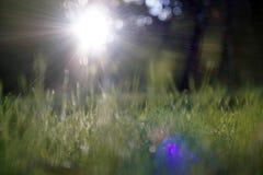 Gleam surpreendente da luz solar durante o por do sol com grama verde como o fundo da natureza imagem de stock royalty free