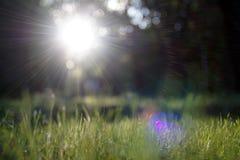 Gleam surpreendente da luz solar durante o por do sol com grama verde como o fundo da natureza imagens de stock