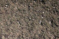 Glebowy tło Fotografia Royalty Free