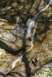 Glen Burney Trail, roccia di salto, NC Fotografia Stock Libera da Diritti