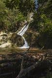 Glen Burney Trail, roccia di salto, NC Fotografia Stock