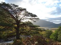 Glen Etive. The sun shining through a tree in glen Etive royalty free stock photography