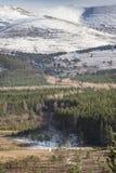 Glen Feshie-Bahn an Inshriach-Wald in Cairngorms von Schottland lizenzfreie stockfotografie